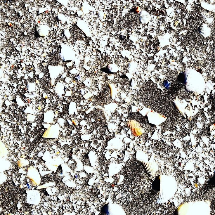Texture Inspiration - #sea #seaside #sand #shell #sunnyday #sun #weekends #weekendvibes #weekend #weekendfun #thehappynow #thatsdarling #pursuepretty #pursuehappy #texture #naturelover #inspiration #art #art #photo #photooftheday