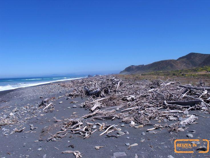 Aangespoeld hout bij het zuidelijkste strand van het noordeiland.