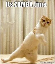 Zumba Cat