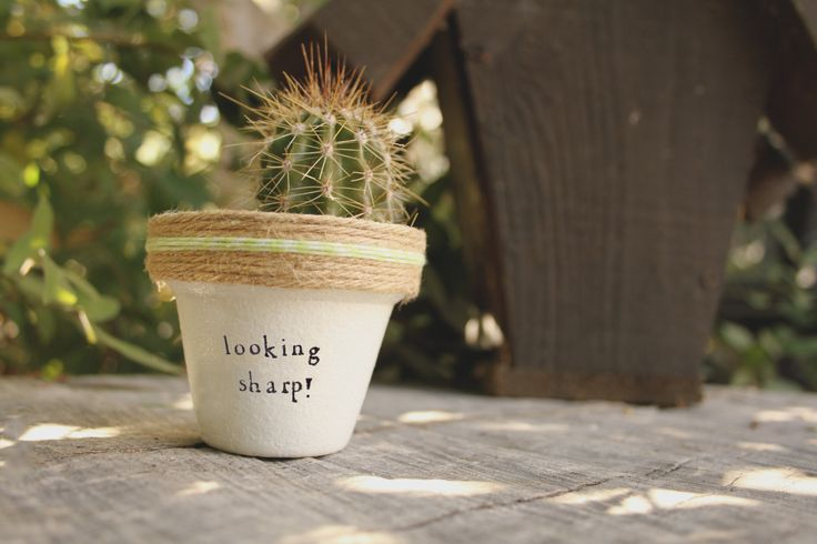 """Looking Sharp!"" Succulent Pot by PlantPuns on Etsy"