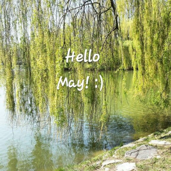 #perfecthome #spring #lake #water #gras #tree #photo #beautiful #perfect #nature #amazing #may