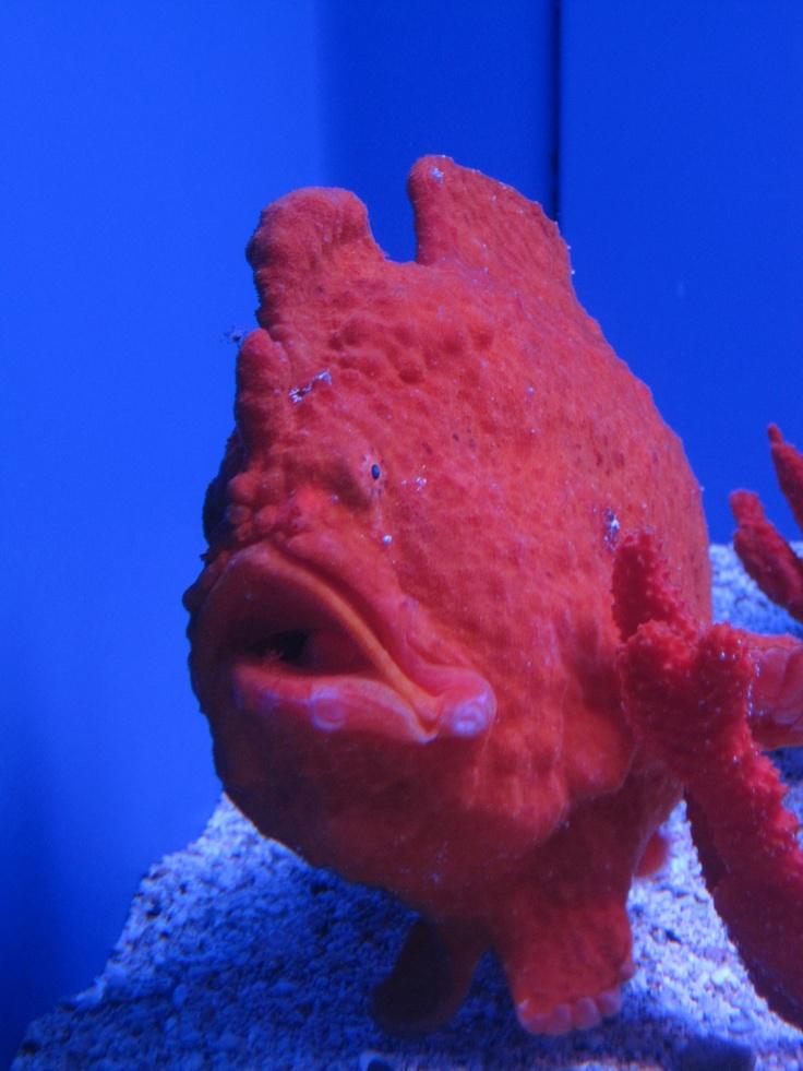 Coral Fish, unbelievable