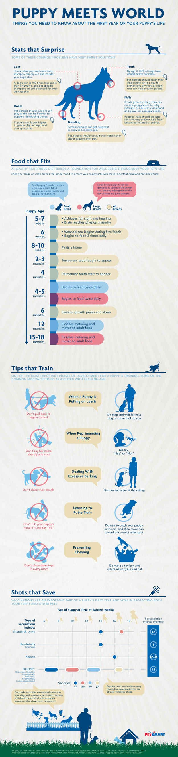 Puppy Meets World (INFOGRAPHIC)
