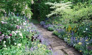 Herbaceous borders are hard enough to spell, never mind master. Here are some tips for getting started.