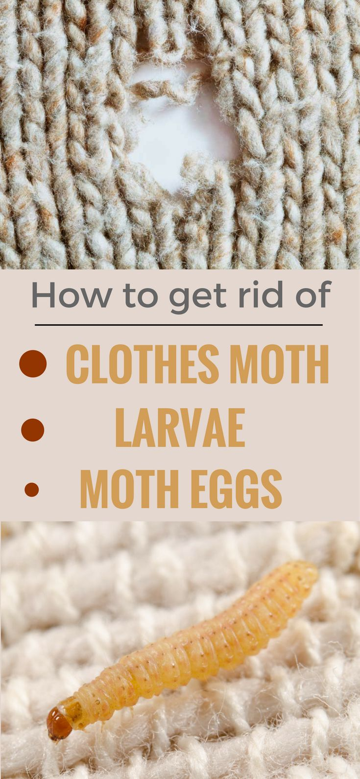 Best methods to get rid of clothes moth, larvae and moth eggs.