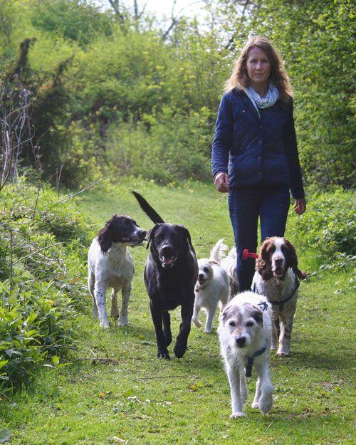 Karin Bradshaw   Dog Behaviourist   Dog Walking   Dog Training