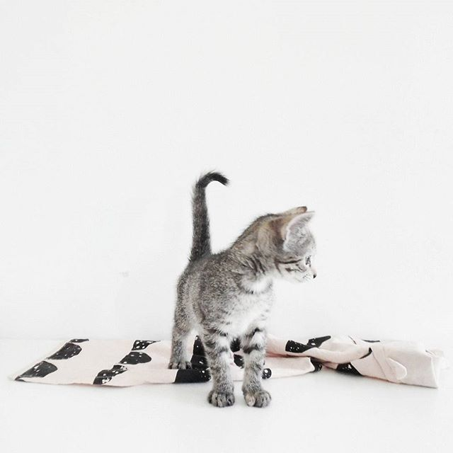 hairball control for cats