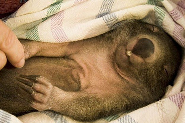 21 Wombats Who Understand The Struggle Of Constant Tiredness.