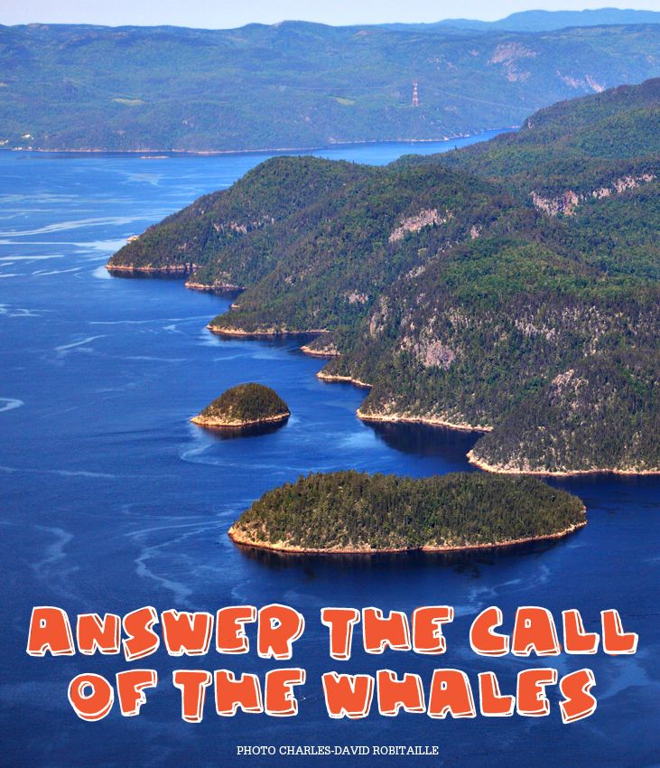 Reason #126 to visit Saguenay-Lac-Saint-Jean region this summer : Answer the call of the whales. #175reasons #QcOriginal
