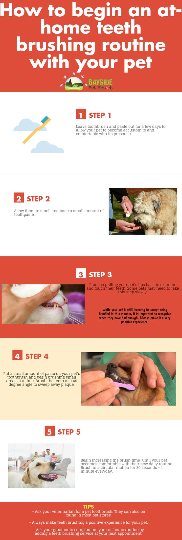Cats Made Easy To Understand With This Article >>> Read more at the image link. #CatLover