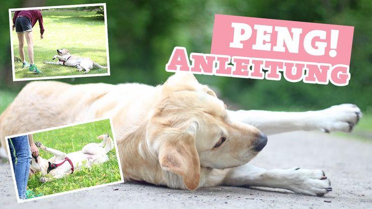 Hund PENG / tot stellen beibringen   Tricks Hundetrick   Hundekanal