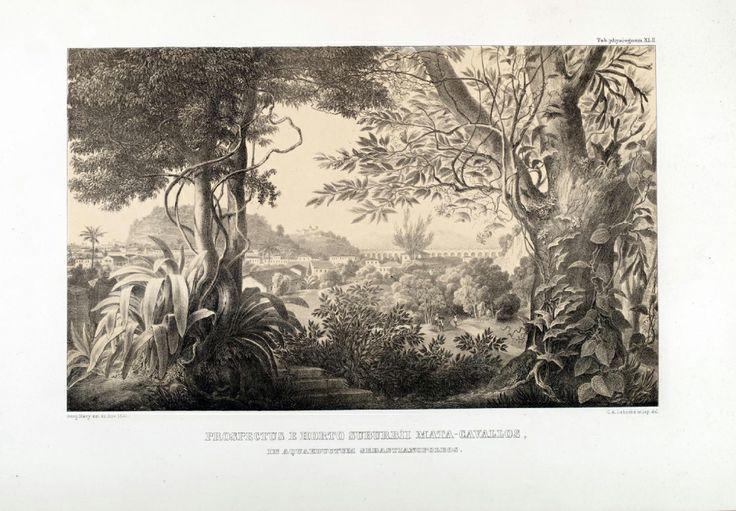 """carl friedrich philipp von martius - illustration plate from """"flora brasiliensis"""": 'prospectus e horto suburbii mata-cavallos, in aquaedutum sebastianopoleos'"""