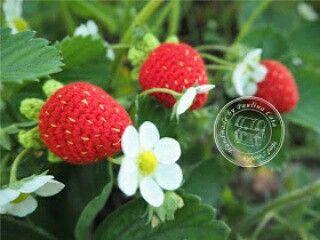 Crochet strawberries, amigurumi, keychain