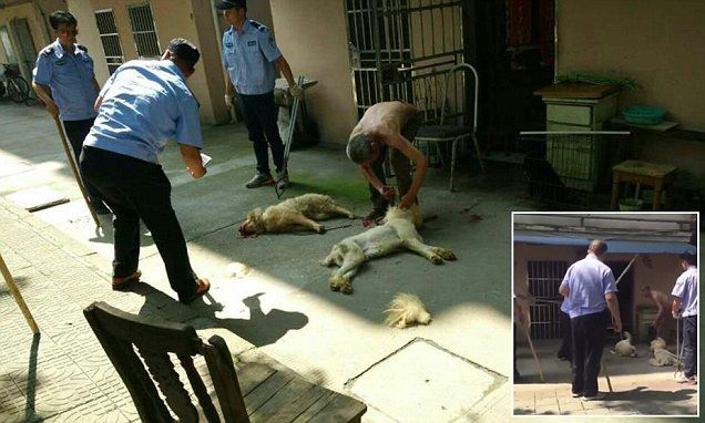 Elderly man sees his pet dogs beaten to death #DailyMail