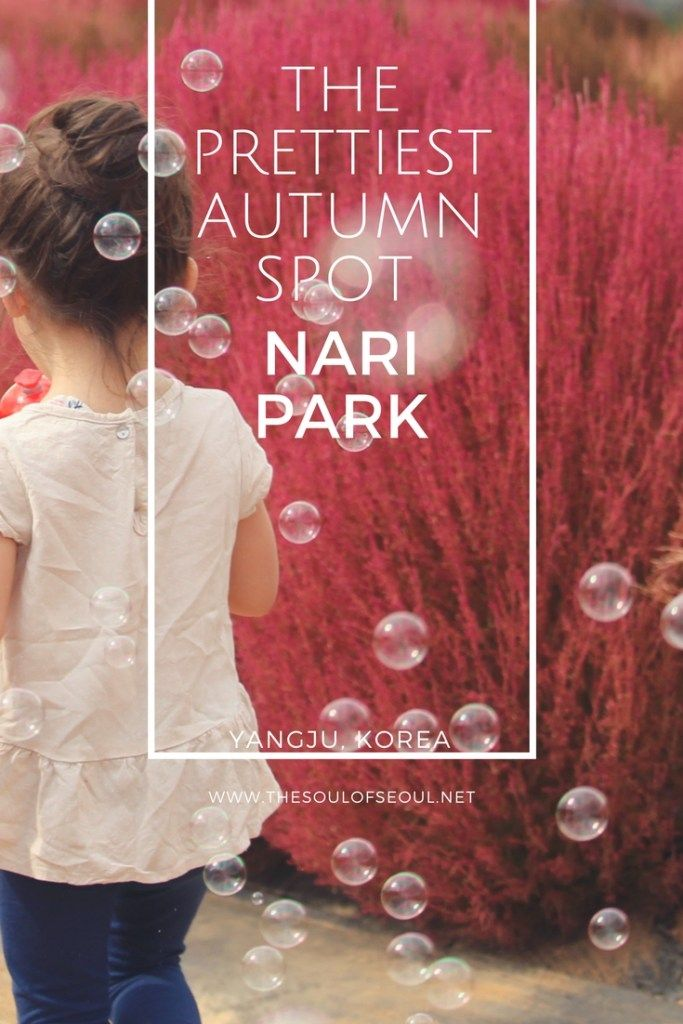 Nari Park in Yangju, Korea is the prettiest place in all of Korea come autumn. From the Kochia flowers to the cosmos, Whirling Butterflies and Globe Amaranth, there are expansive flower fields unlike anywhere else in the country. For the best autumn picture setting, check out this gorgeous park in South Korea.