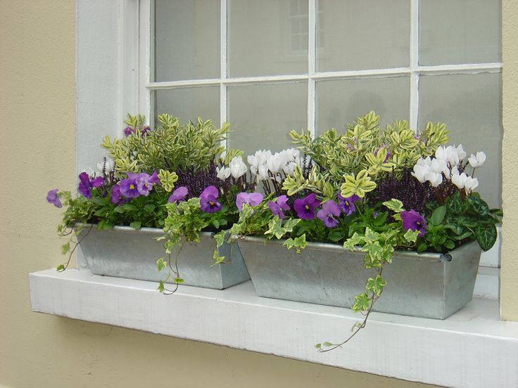 The 25 best window box flowers ideas on pinterest for Flower garden box ideas