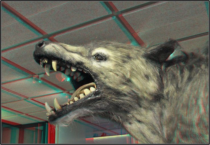 https://flic.kr/p/bVbUtn   Andrewarchus 3D    Museon Den Haag  3D