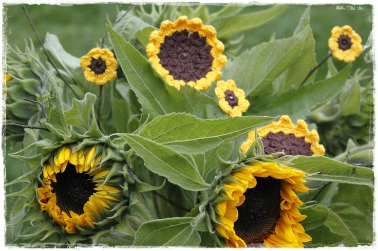 Gehaakte zonnebloemen tussen een bos echte zonnebloemen - gratis patroon