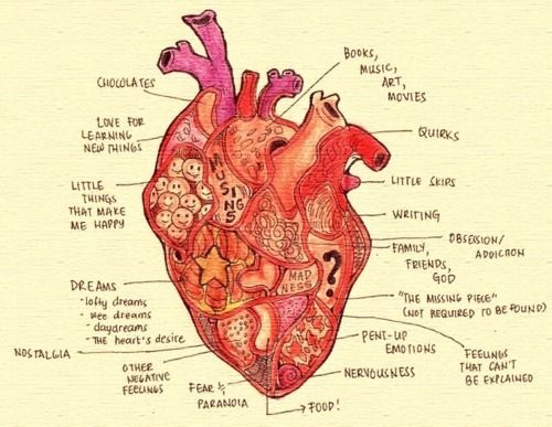 heartLife, Quotes, Heart Diagram, Heart Anatomy, Heart Illustration, Heart Art, Heart Charts, Things, Plain Awesome