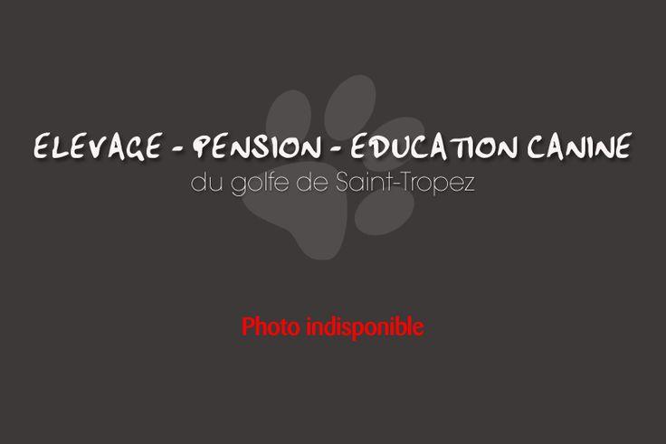 Les Chiots à vendre Cavalier King Charles - ELEVAGE PENSION EDUCATION CANINE VAR - Elevage de chiens dans le Var 83 - Chiots à la vente teckel nain poil long NICE et CANNES 06 - ELEVAGE DE CHIOTS REGION PACA - Vente chiots Teckel nain poil dur Var 83 - Vente de chiens et chiots Alpes-Maritimes 06 - AHETER UN CHIOTS DANS LE VAR 83