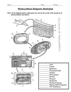 Photosynthesis Diagrams Worksheet Worksheet