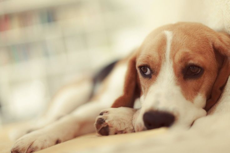 Pot lovers beware: your favorite drug could kill your pet.