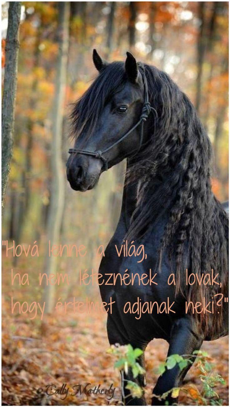 """""""Hová lenne a világ,  ha nem léteznének a lovak,  hogy értelmet adjanak neki?""""...not sure what the quote says, but I love horses!"""