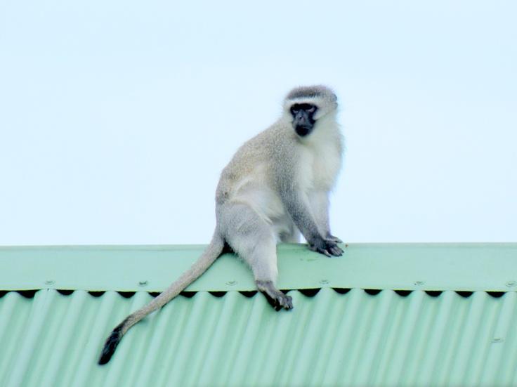 #monkey #animal #beauty #mono