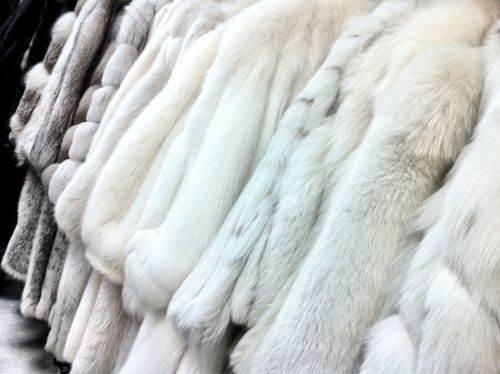 17 Best images about Fur on Pinterest | Fur, Fur coats and Silver ...