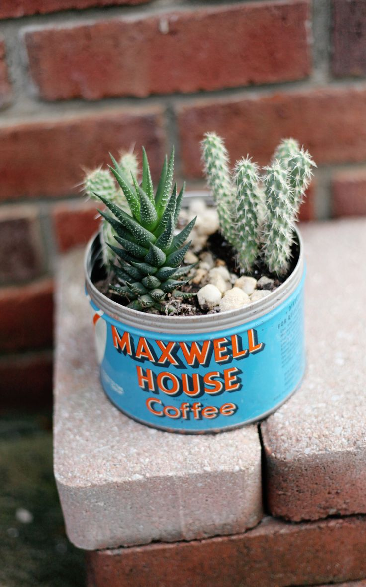 25 best ideas about mini cactus garden on pinterest. Black Bedroom Furniture Sets. Home Design Ideas