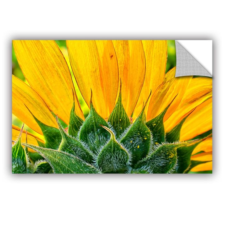 Sunflower Fan by Julie Mann Sperry Wall Mural