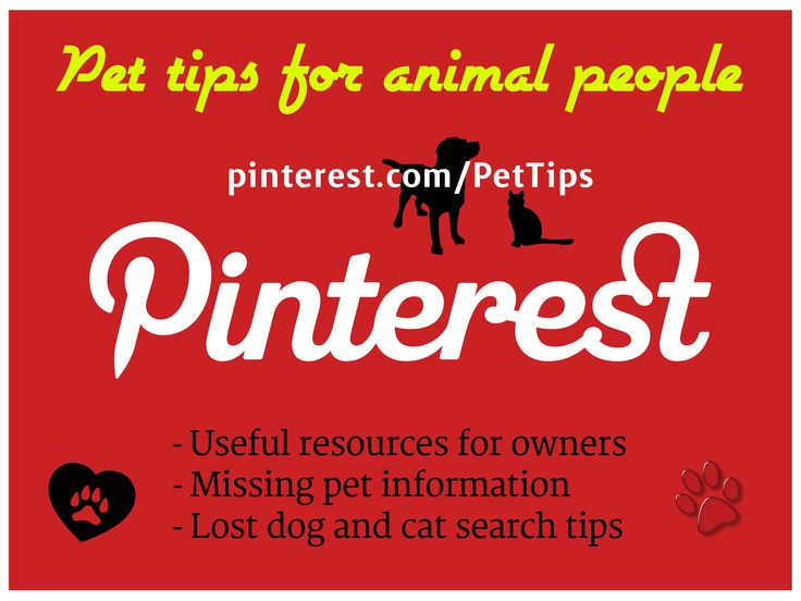 98 best Missing Pet Tips images on Pinterest Lost pets, Your pet - missing pet template
