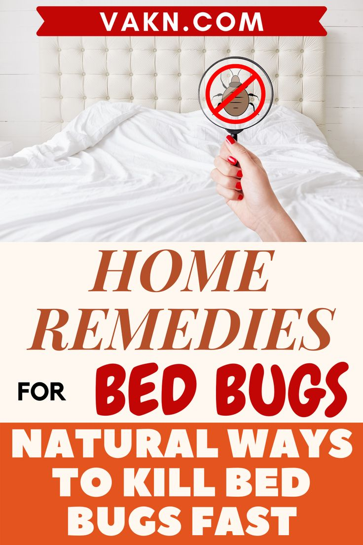 If you're looking to get rid of bed bugs with home