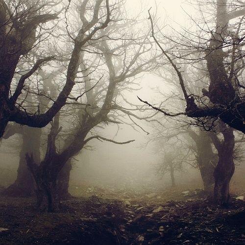 Dark Forest, Evia, Greece photo via therese