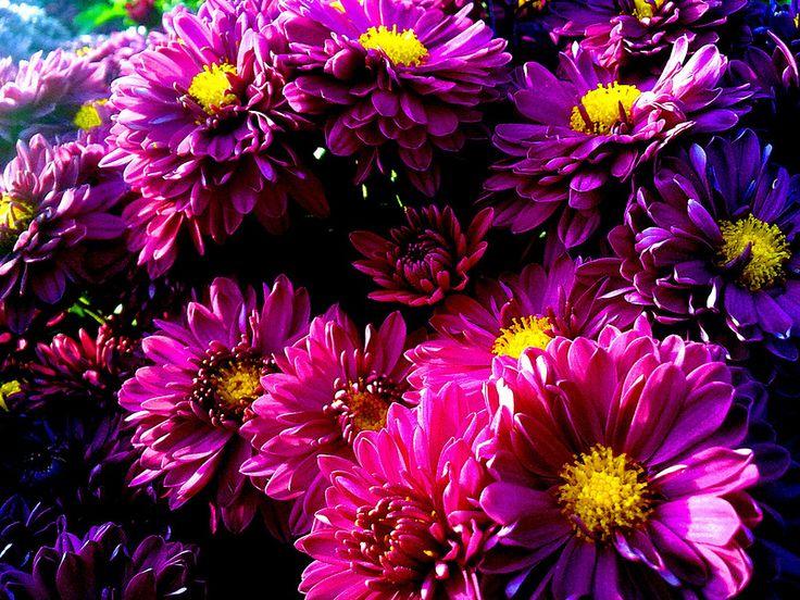 Purple Flowers - Mor Çiçekler