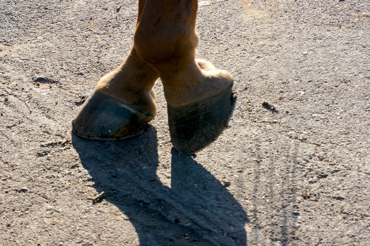 pas de deux by Silvia Fernández Moreno on 500px #caballos #horses cascos de caballo