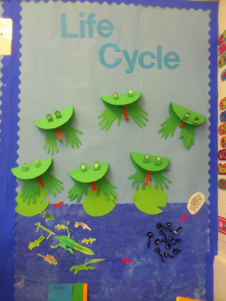 Frog life cycle display from my Year 2 class, compiled by combining ideas from pinterest!