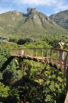 Kirstenbosch Tree Canopy Walkway in South Africa
