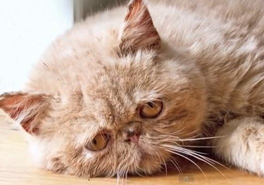 Sad Cat Diary - there is a link to the video, so funny!