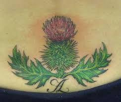 Bildergebnis für tattoo schottische distel