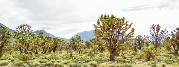 Joshua Tree Forest Art Print by Leslie Montgomery.