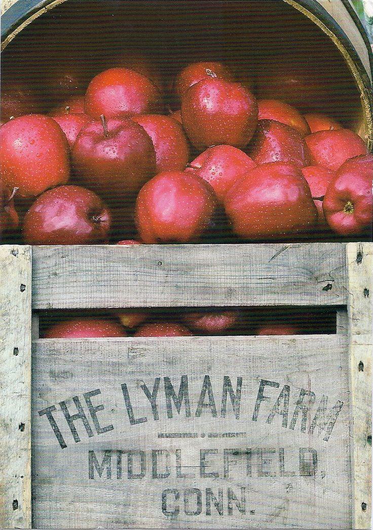 Lyman Farm, apple pickin' time