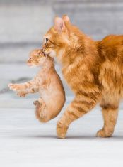 Mom cat with kitten stock photo
