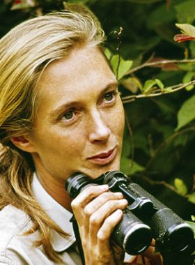 Jane Goodall. Cool chick.