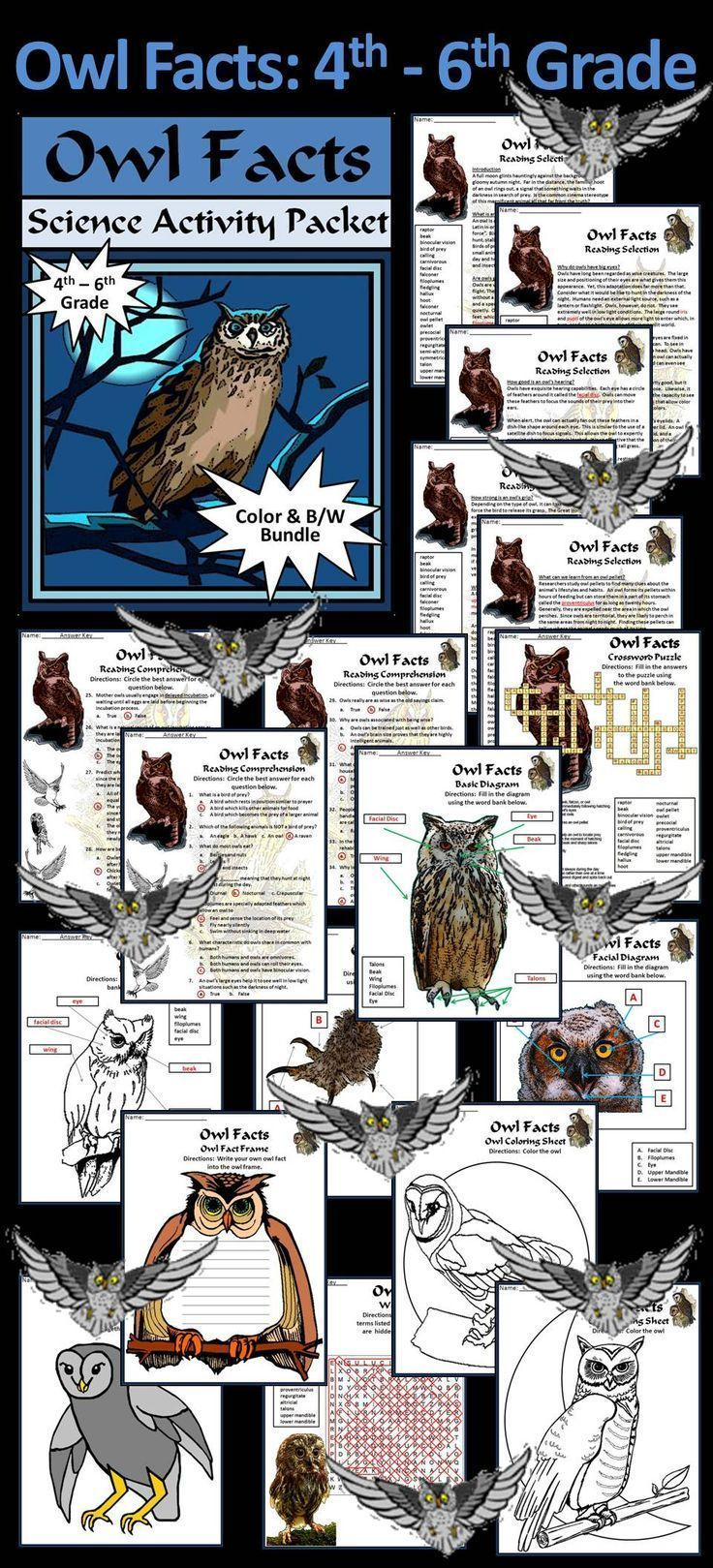 owl facts for grade one pdf