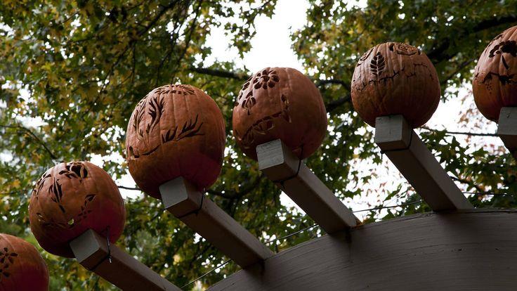 10.22-23 Giant Pumpkin Weekend