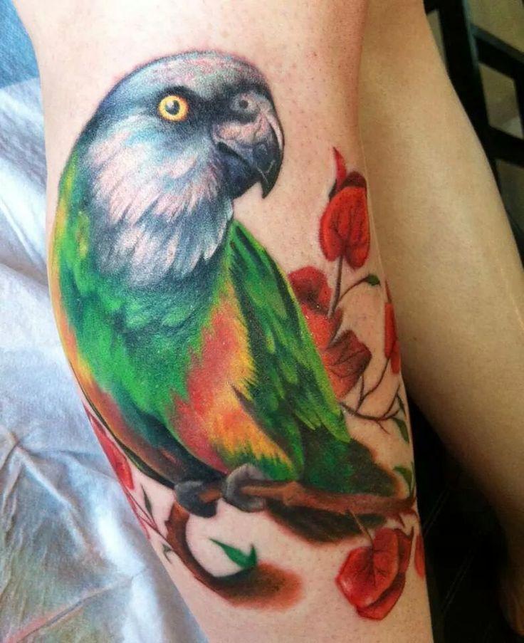 Hyperrealistic tattoo www.tattoodefender.com #Hyperrealistic #hyperreal #tattoo #tatuaggio #tattooart #tattooartist #tatuaggi #tattooidea #ink #inked #realistico Pharr Texas, at Buena Suerte Tattoo Shop by Ceci. It's a Senegalese Parrot.