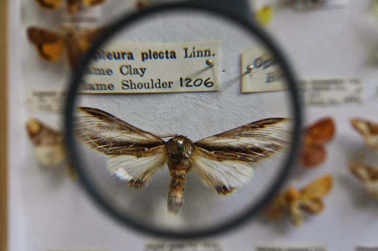 Butterfly and moth collection. Photographing natural history for a new project