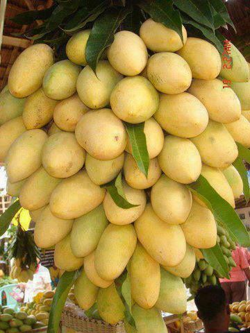Philippine Mangoes ~ National Fruit. The best Mangoes in the world.