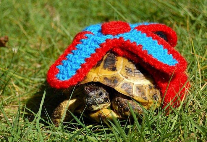 Вязаная крючком одежда для черепах от Кэти Брэдли (Katie Bradley)